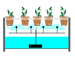he-thong-thuy-canh-aeroponics