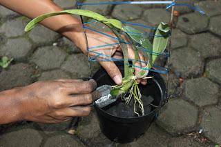 Cách trồng hoa lan bằng chậu nhựa