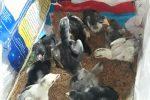 Cách chữa bệnh gà rù hiệu quả