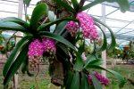 Cách trồng hoa lan rừng đơn giản