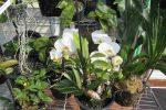 Cách trồng hoa lan trong chậu áp dụng chung cho các loại lan