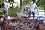 Cách ủ phân chuồng với nấm đối kháng Trichoderma bón cây cam