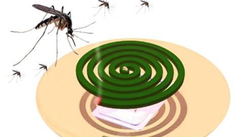 Dùng hương muỗi khi lợn đang chửa có sao không?