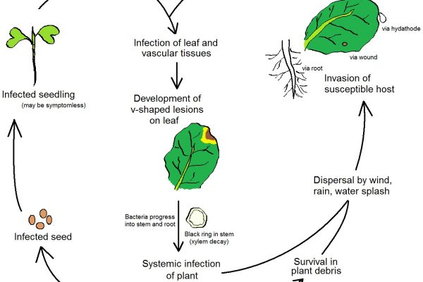 Cách kiểm soát dịch bệnh hại cây trồng