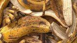 3 loại phân bón từ rác thải cực tốt cho cây trồng