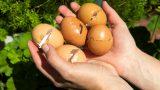 Cách ủ phân từ vỏ trứng bón cây